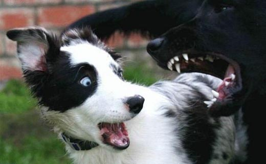 funny-game-biz. Home gt;gt; Funny gt;gt; Shocked Puppy